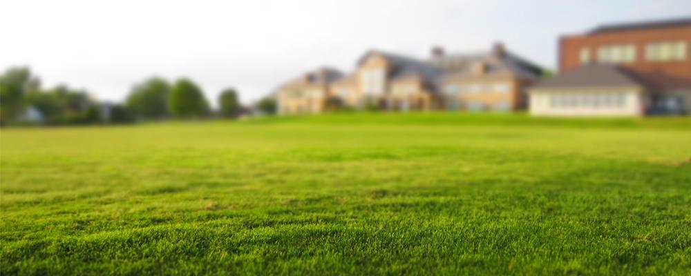 green-grass