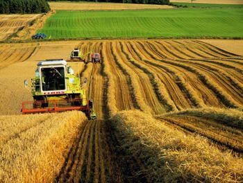 земля для хозяйства